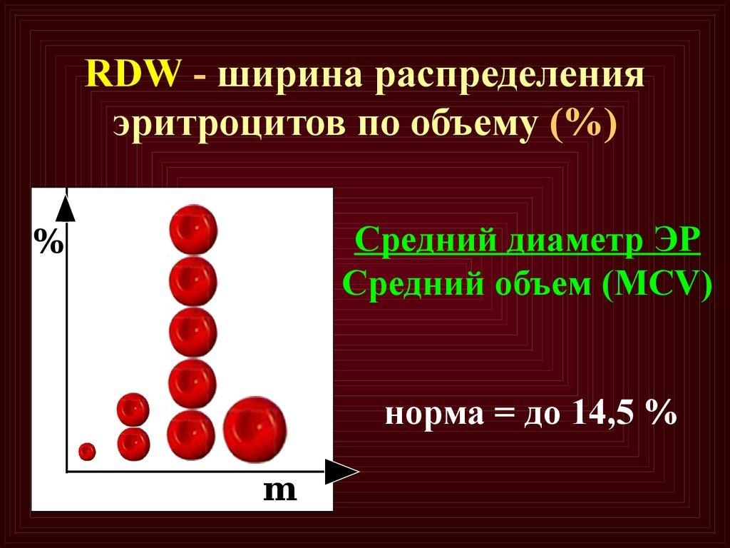 RDW CV и RDW SD крови