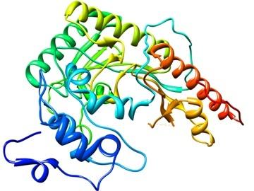 Креатинкиназа крови