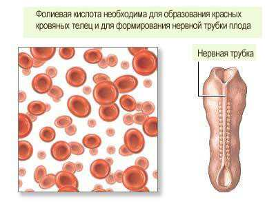 Фолиевая кислота крови