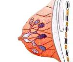 N60.4 Эктазия протоков молочной железы