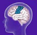 Причины появления и признаки эпилепсии, код заболевания по МКБ 10