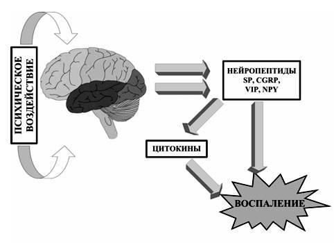 Механизм возникновения психогенной крапивницы