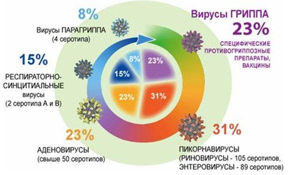 Структура заболеваемости ОРВИ